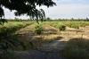 vista general plantaci�n